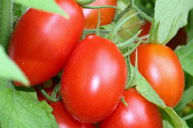 Nên bổ sung cà chua vào thực đơn hàng ngày